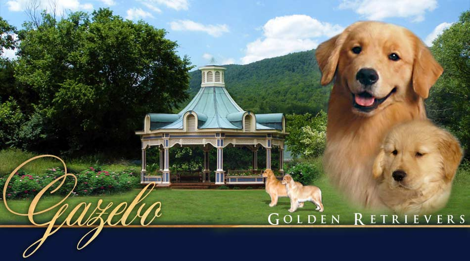 Gazebo Golden Retrievers